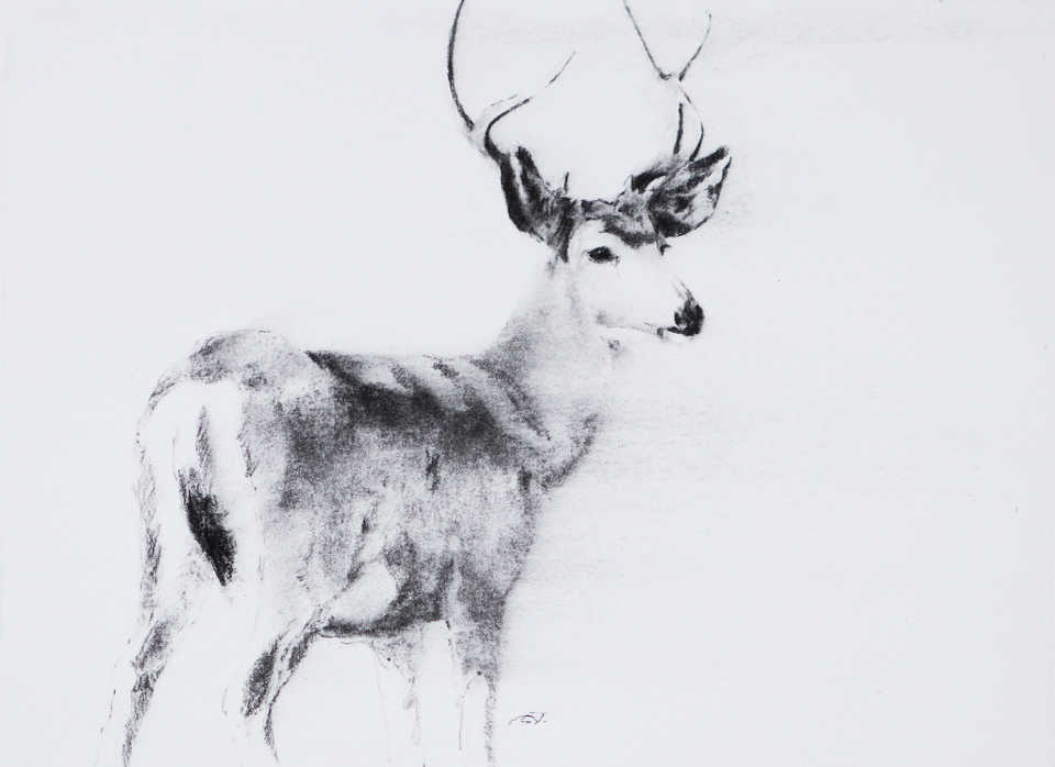 Jackson, Wy Oil Painter September Vhay - DEER RUN MUSE